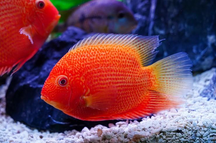У некоторых особей имеются невероятно яркие красные пятна