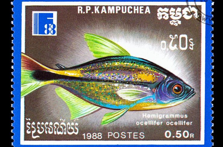 Марка с изображением тетры-фонарик. Камбоджа, 1988 г.